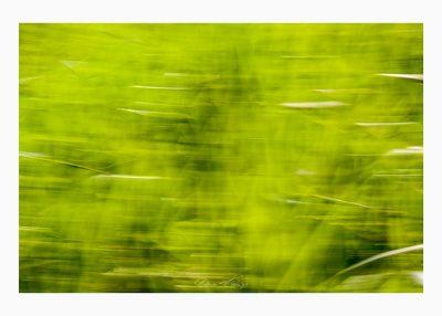 gebügelt Foto © Vitoscha Königs