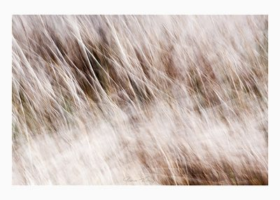 geschnitten Foto © Vitoscha Königs