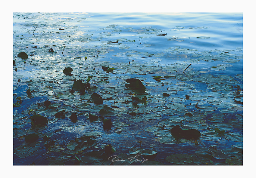 Water Lilies No.0356 Foto © Vitoscha Königs