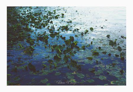 Water Lilies No.0358 Foto © Vitoscha Königs