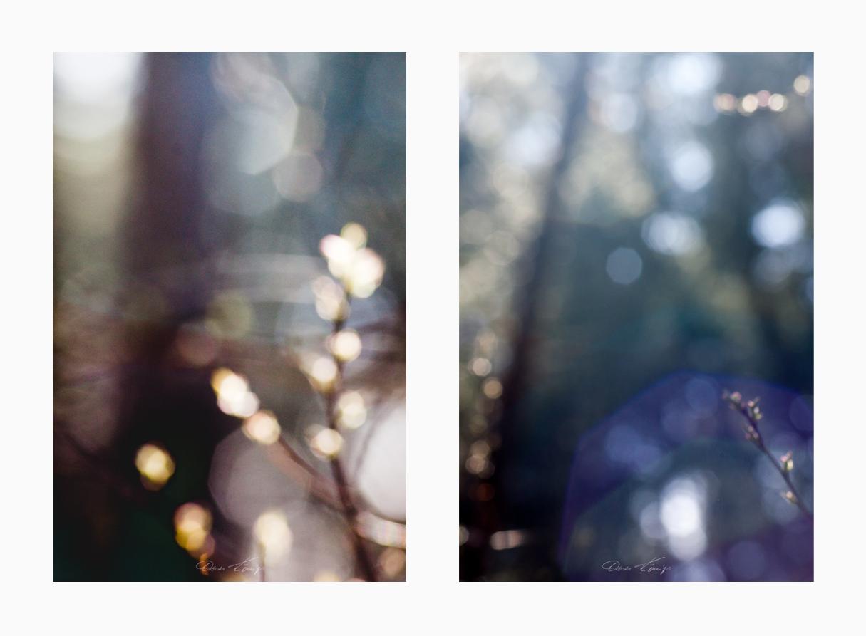 Lampau Pren No.10 Foto © Vitoscha Königs